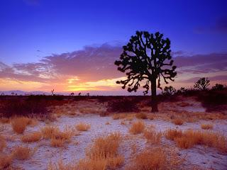 Mojave Wizard